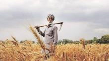 How these Punjab farmers are making farming profitable by ditching mandis, selling directly to customers