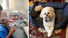 Menino costura gravatas-borboleta para cães e gatos que estão em abrigos nos EUA
