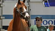 Report: Justify's breeding rights sold for $60M