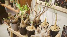 Green Egg Store:種懶人植物學懂慢活
