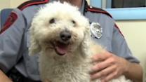 Dog hit by car, survives 11-mile ride in grill