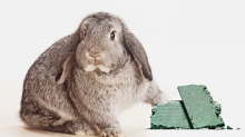 The big problem with the California bill that bans cosmetic animal testing