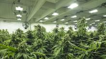 Fallout Continues for Canopy Growth Following Co-CEO Linton's Departure