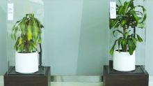 Acosar a una planta durante 30 días, la nueva campaña de IKEA