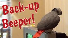 Talking parrot gives warning as he backs up