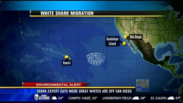 Shark expert says more great whites are off San Diego