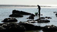 Sur la Côte d'Opale, Myriam exerce le rare métier de pêcheuse à pied de moules
