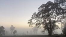 Heavy Fog Settles on Field in Canberra, Australia