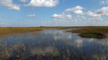New urgency in fight to restore Florida Everglades