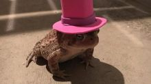 Toad goes viral after woman makes him variety of hats to wear