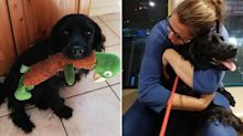 'I fell to pieces': Family delighted after dog stolen six years ago is returned to them