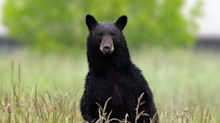Judge refuses to open up New Jersey parklands for state bear hunt