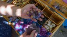 En Tunisie, un passionné de la pourpre ressuscite ce précieux pigment antique