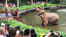 Singapore Zoo stops making elephants perform in new format for show
