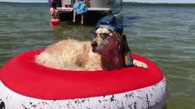 Super cool Golden Retriever chills out on a raft