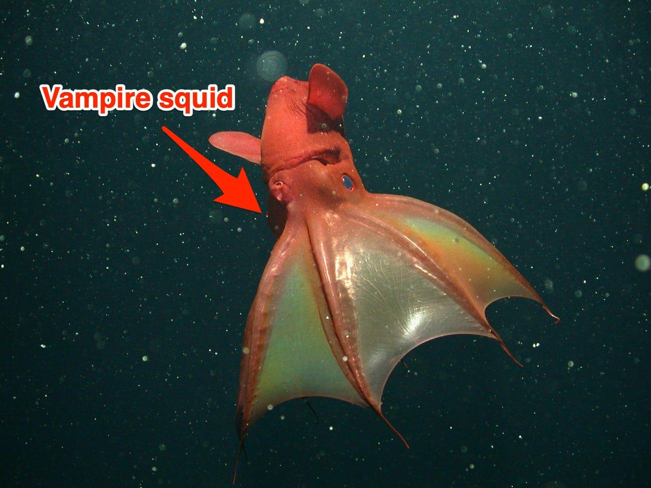 16 creatures from the bottom of the ocean that will give you nightmares