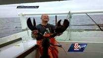 Giant lobster caught off Gloucester