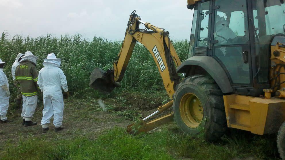 Texas Farmer Killed After Tractor Disturbs Bee Hive