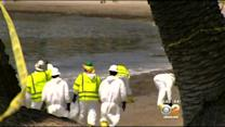 Oil Cleanup Continues Along Santa Barbara Coast