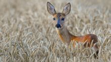 Man shoots brother after mistaking him for a deer
