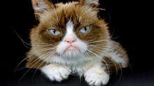 Internet-famous feline Grumpy Cat passes away at age 7