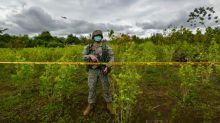 Colômbia tem maior quantidade de cultivo de drogas do mundo na fronteira com Venezuela