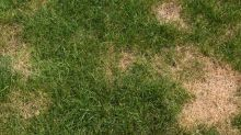 The Easiest Way to Repair Grass Damaged By Dogs