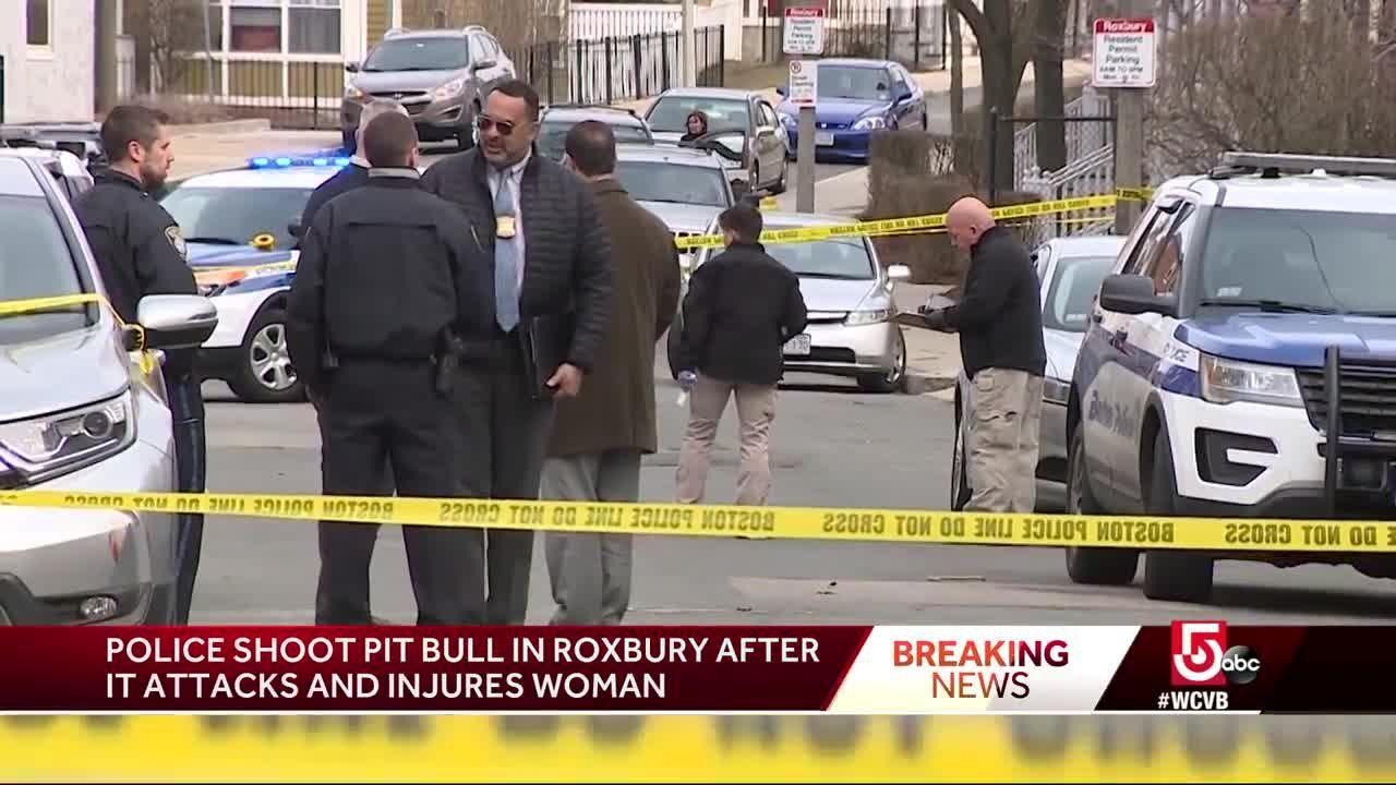Pit bull attack in Boston prompts police to shoot dog