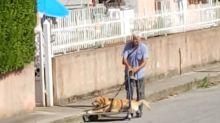 Tonino e il cane malato, la storia che commuove