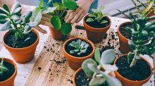 How to grow happy houseplants