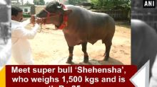 Meet super bull 'Shahenshah', who weighs 1,500 kgs and is worth Rs 25 crore