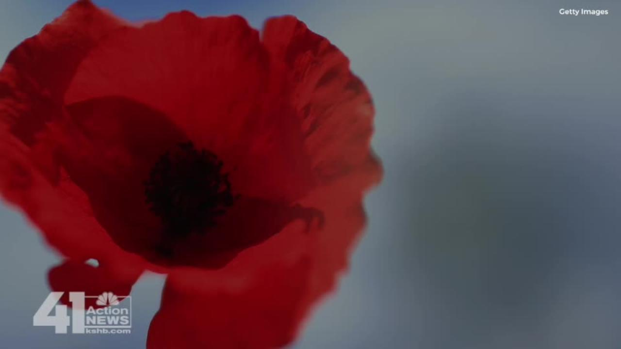 Meaning Behind The Red Poppy And Its Connections To Wwi Video