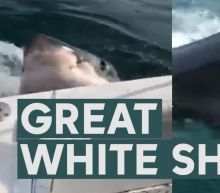 'Once in a lifetime': Close encounter with Great White Shark shocks fishermen off Jersey Shore