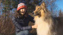 'Every season is tick season': Experts warn of winter Lyme disease risk