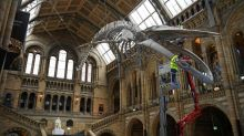 Locals enjoy rare calm at London museums