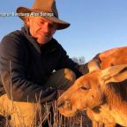 Roger the ripped kangaroo's caretaker: 'Roger and I were best mates'