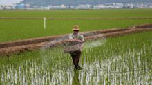Ten million North Koreans in 'dire need' of food after worst drought since 1982