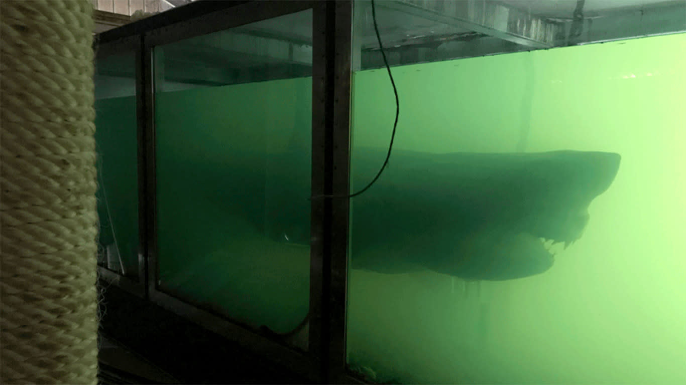 News plans for preserved great white shark at abandoned wildlife park