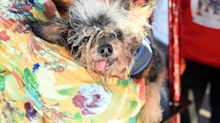 Scamp the Tramp named the world's 'ugliest dog'