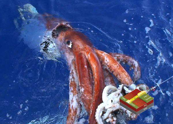 Squid extract bridges human / machine divide, cyborgs to become very real