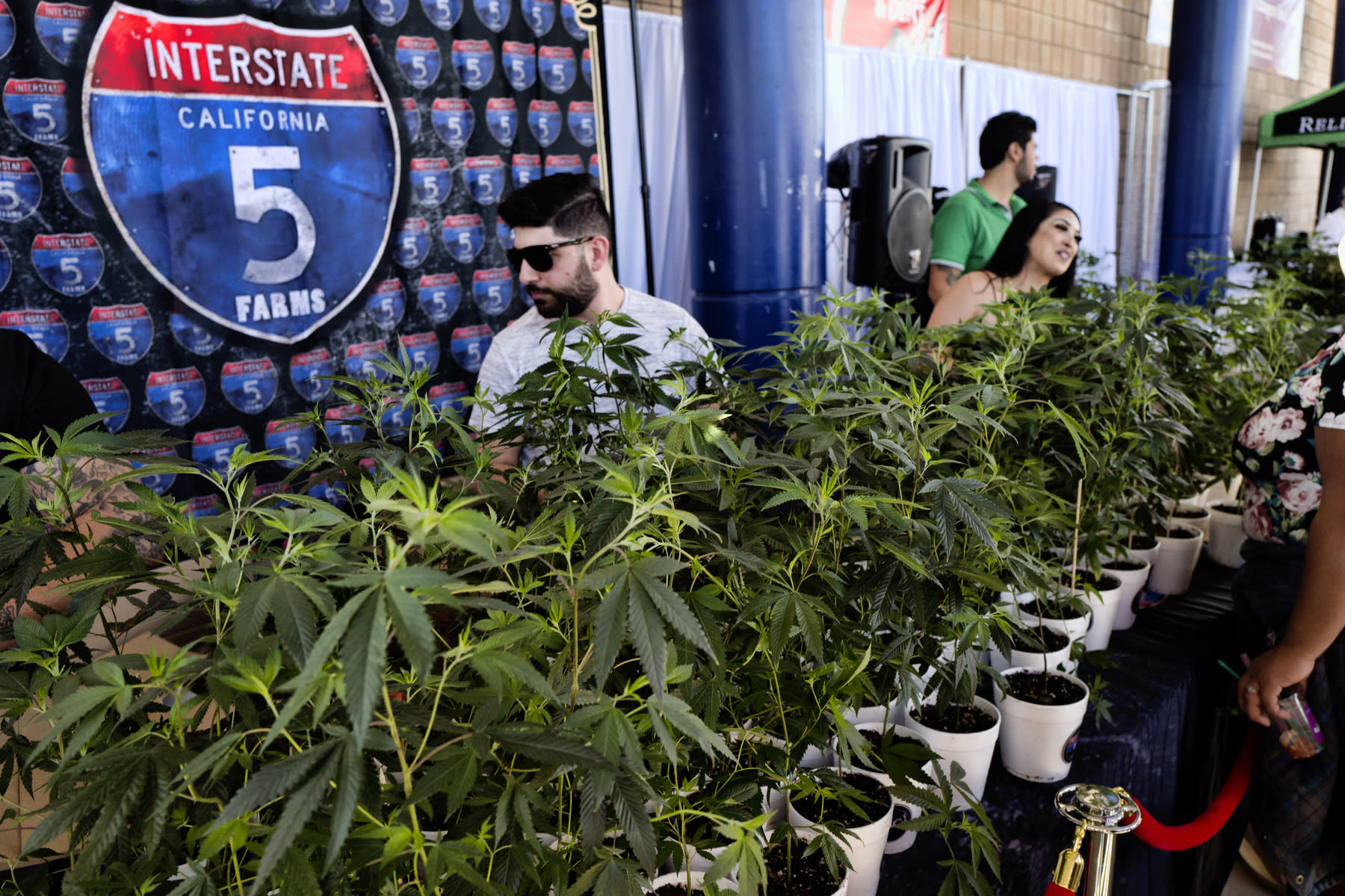 Kushstock Festival 2020.California Pot Taxes Tick Up But Miss Initial Projections