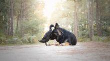 Fotógrafa registra a bela amizade entre sua cadela e um pato