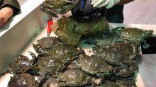 De guanacos, cangrejos a patas de cerdo: lo insólito y prohibido que intentaron ingresar al país