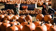 Nature deals a blow to pumpkin sales