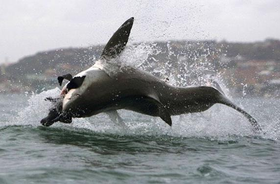 3D printing shows why sharks are so deadly efficient