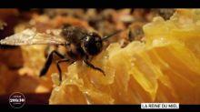 """""""Quand on élève des abeilles, on contribue à travailler dans l'intérêt général, au service de l'humanité"""" : une apicultrice lanceuse d'alerte"""