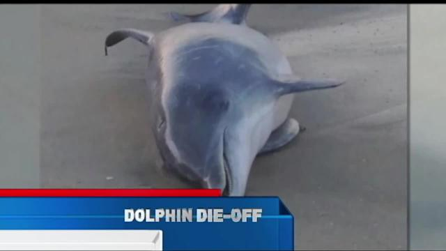 Scientists Puzzled By Dolphin's Deadly Summer