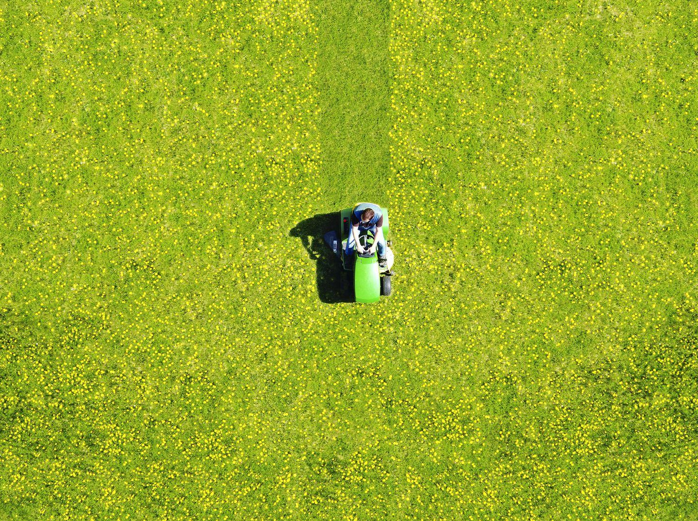 The Ultimate Guide to Buying a Lawn Mower