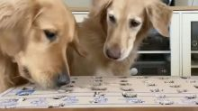Dogs enjoy DIY whack-a-mole game