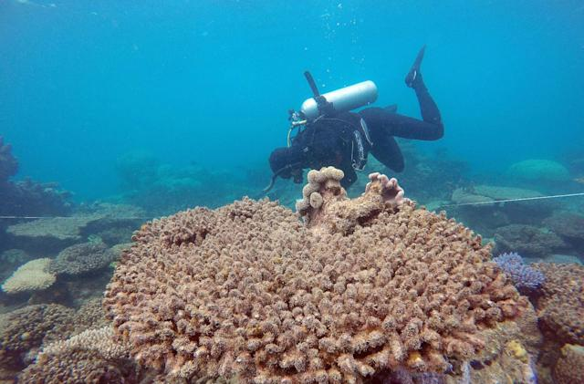 Record swathes of the Great Barrier Reef died in 2016